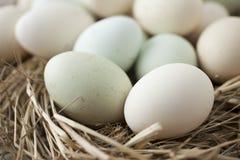 Udział jajka w wieloskładnikowych kolorach obrazy stock