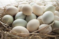 Udział jajka w wieloskładnikowych kolorach zdjęcie stock