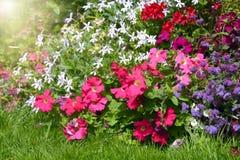 Udział kwitnąć różnych kwiaty i rośliny Zdjęcie Royalty Free