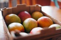 Udział mango w stojaku zdjęcie royalty free
