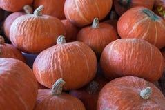 Udział pomarańczowe cisawe banie sprzedawać na rolnikach wprowadzać na rynek obrazy stock