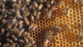 Udział pszczoły honeycomb beekeeping tła stylu życia pracy poruszający chodzenie w roju beekeeping pojęcia miód zbiory