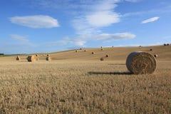 Udział rolki trawa w polu obrazy stock