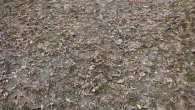 Udział stary ulistnienie na ziemi w parku zdjęcie wideo