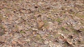 Udział stary ulistnienie na ziemi w parku zbiory