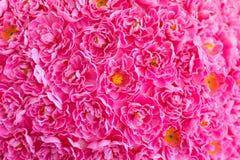 Udział sztuczne menchie kwitnie w kolorowym składzie obrazy stock