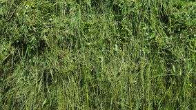 Udział zielona trawa fotografia stock