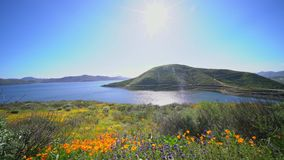 Udziały dziki kwiat kwitną przy Diamentowym Dolinnym jeziorem zdjęcie wideo