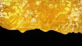 Udziały miodowy bieg puszka honeycomb zbiory wideo