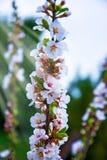 Udziały piękny jaskrawy światło kwitną, kwiatostany r na roju, Zdjęcie Stock