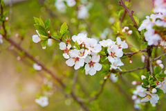 Udziały piękny jaskrawy światło kwitną, kwiatostany r na roju, Obrazy Stock