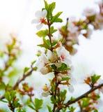 Udziały piękny jaskrawy światło kwitną, kwiatostany r na roju, Zdjęcia Royalty Free