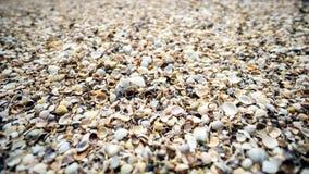 Udziały skorupa zakrywają morze Obraz Royalty Free