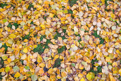 Udziały spadać liście na trawie Obraz Royalty Free