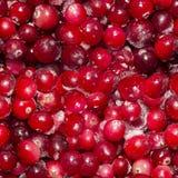 Udziały zamarznięci cranberries Bezszwowy tło, tekstura jagody obrazy stock