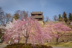 Ueda Castle during spring royalty free stock photos