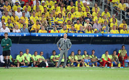 UEFA EURO 2016: Sweden v Belgium. NICE, FRANCE - JUNE 22, 2016: Head Coach of Sweden National football team Marc Wilmots looks on during UEFA EURO 2016 game Royalty Free Stock Photography