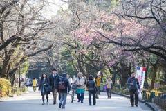 UENO, JAPÃO - 19 DE FEVEREIRO DE 2016: blo bonito de sakura ou de cereja Imagens de Stock
