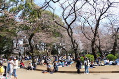 Ueno Park during the cherry blossom season Royalty Free Stock Photo