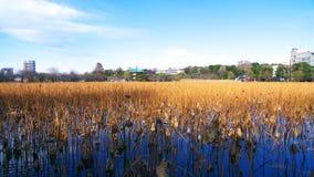 Ueno Park jezioro Zdjęcie Stock