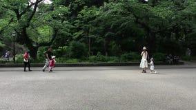 Ueno Park. People walk and enjoy nice weather at Ueno park stock footage