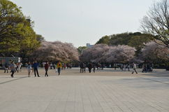 Ueno Park and Sakura tree in the spring with people Royalty Free Stock Photography