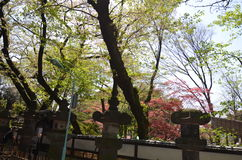 Ueno Park Royalty Free Stock Images