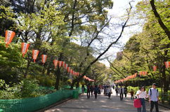 Ueno Park Royalty Free Stock Photo