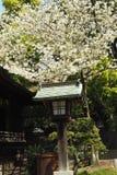Ueno Park Royalty Free Stock Image