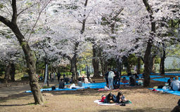 Ueno park, Tokio, Japonia Obrazy Stock