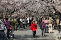 Ueno Park, Tokyo Royalty Free Stock Photos