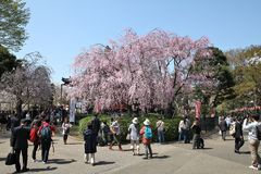 Ueno Park Stock Photography