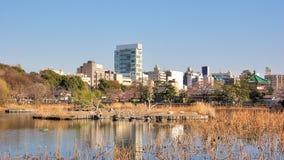 Ueno park, Tokyo, Japan. Contemporary city view in Taito district. Ueno park and cherry blossom (sakura), Tokyo, Japan Royalty Free Stock Images