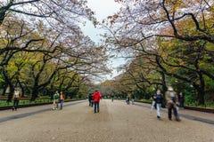 Ueno park w Tokio, Japonia Obraz Royalty Free
