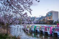 Ueno Sakura Matsuri Cherry Blossom Festival en Ueno ParkUeno Koen, Taito, Tokio, Japón en abril 7,2017: Bicis del agua y tre de l Imagen de archivo