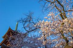Ueno Sakura Matsuri Cherry Blossom Festival en Ueno ParkUeno Koen, Taito, Tokio, Japón en abril 7,2017: pagoda de la Cinco-histor Foto de archivo libre de regalías