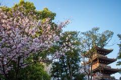 Ueno Sakura Matsuri Cherry Blossom Festival en Ueno ParkUeno Koen, Taito, Tokio, Japón en abril 7,2017: pagoda de la Cinco-histor Fotos de archivo libres de regalías