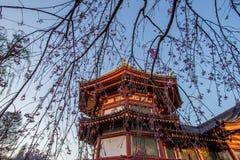 Ueno Sakura Matsuri Cherry Blossom Festival en Ueno ParkUeno Koen, Taito, Tokio, Japón en abril 7,2017: Templo de Bentendo con el Imagen de archivo libre de regalías