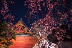 Ueno Sakura Matsuri Czereśniowego okwitnięcia festiwal przy Ueno ParkUeno Koen, Taito, Tokio, Japonia na Kwietniu 7,2017: Brązowa Fotografia Stock