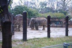 Free Ueno Zoo Tokyo Japan Stock Image - 85686821
