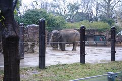 Ueno zoo Tokyo Japan Stock Image