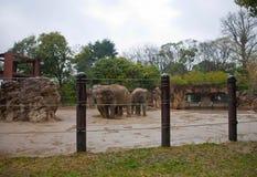 Ueno zoo Tokyo Japan Royalty Free Stock Images