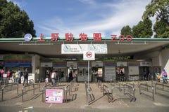 Ueno zoo in Tokyo, Japan royalty free stock photos