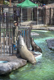 Ueno zoo in Tokyo, Japan royalty free stock photo