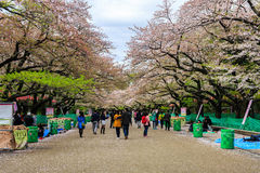 Uenopark in lentetijd met kersenbloesem Stock Afbeeldingen