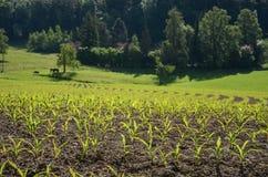 Uetliberg小山的,瑞士苏黎士农场 免版税库存照片
