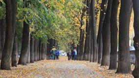 UFA ROSJA, PAŹDZIERNIK, - 11, 2017: Spada liście Jesień w miasto parku w żółtych liściach zdjęcie wideo