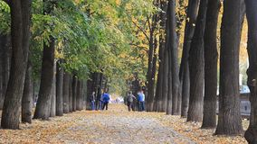 Ufa, Rusia - 11 de octubre de 2017: El callejón de oro colorido en el parque del otoño, hojas es fallng Un grupo de gente joven almacen de metraje de vídeo