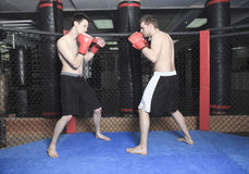 UFC Fighter Stock Photo
