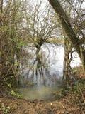Ufer-Baum Lizenzfreies Stockfoto